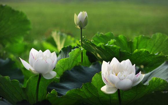 Giới thiệu phần hai 5 tập thơ Hoa Đạo Pháp của tác giả Mặc Giang