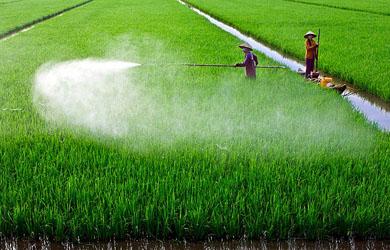 Người làm Nông nghiệp và giới cấm Không sát sanh