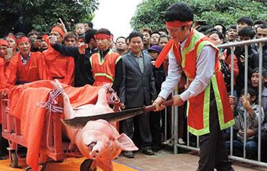 Lễ Hội chém lợn, người làng Ném Thượng quyết làm trò ác
